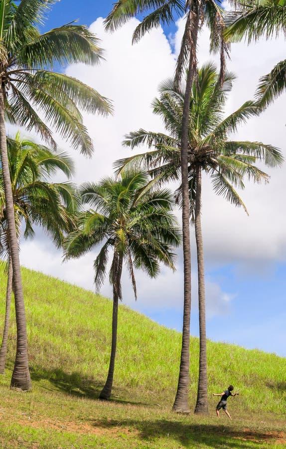 Noci di cocco nell'isola di pasqua, Cile fotografie stock