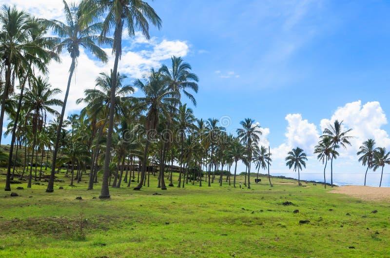 Noci di cocco nell'isola di pasqua, Cile fotografia stock