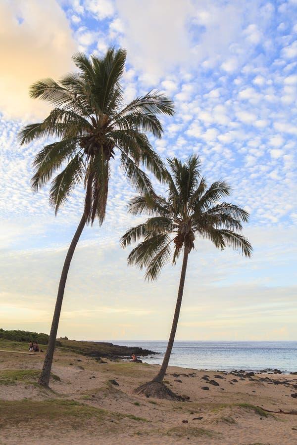 Noci di cocco nell'isola di pasqua, Cile immagini stock libere da diritti