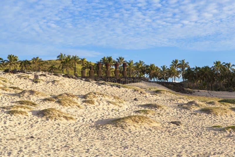 Noci di cocco nell'isola di pasqua, Cile immagini stock