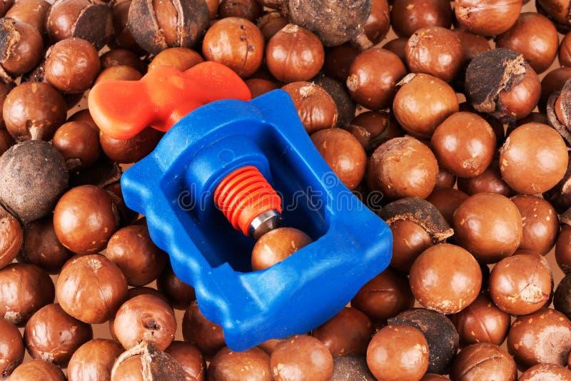 Download Noci di macadamia immagine stock. Immagine di coperture - 30827287