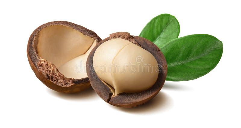 Noci di macadamia e foglie isolate su fondo bianco fotografia stock