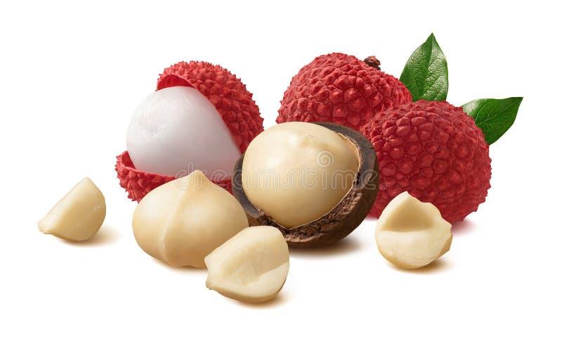 Noci di macadamia e frutta del litchi o del litchi isolata su fondo bianco immagine stock libera da diritti