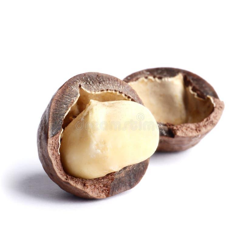 Noci di macadamia isolate su fondo bianco immagine stock