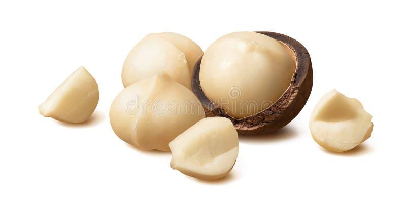 Noci di macadamia sbucciate e pezzi isolati su fondo bianco fotografia stock libera da diritti
