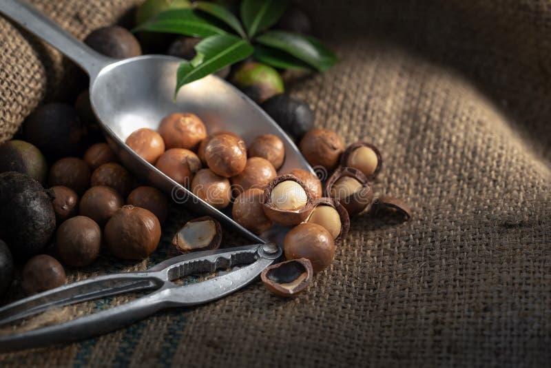 Noci di macadamia su tela di sacco alla luce scura fotografia stock