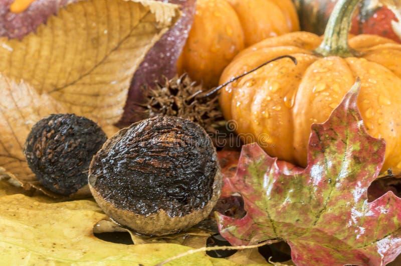 Noci di natura morta di autunno fotografie stock libere da diritti
