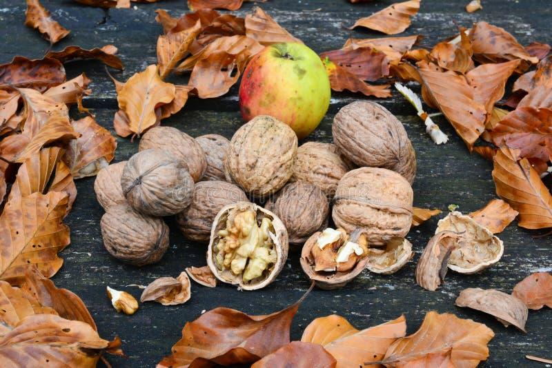 Noci, foglie di autunno e mele selvagge immagini stock libere da diritti