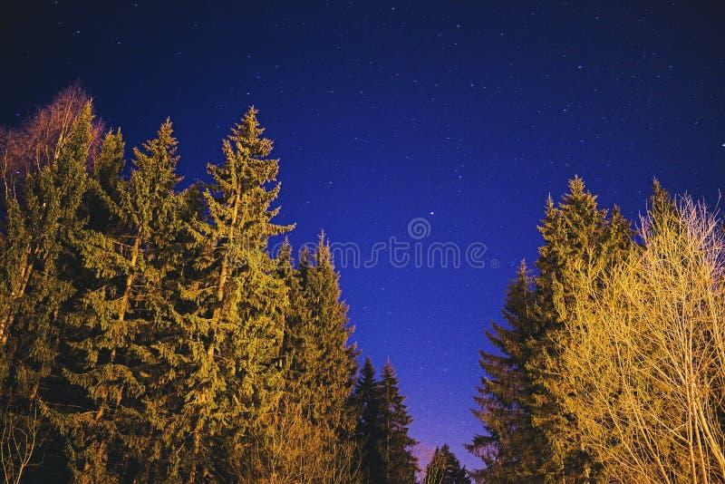 Nocne niebo, gwiazdy i drzewa, fotografia royalty free
