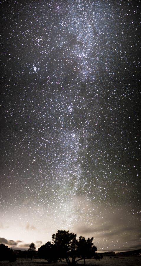 Nocne Niebo nad drzewo fotografia stock