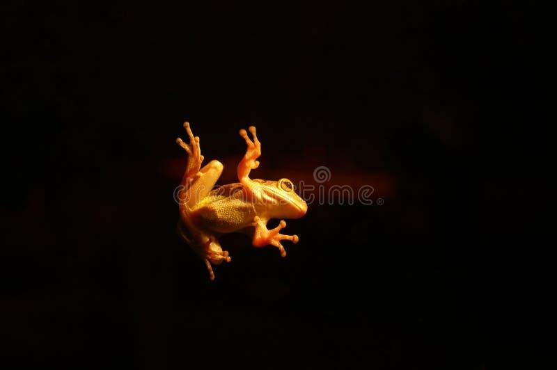 Download Nocne życie zdjęcie stock. Obraz złożonej z ujawnienie, bluza - 32952