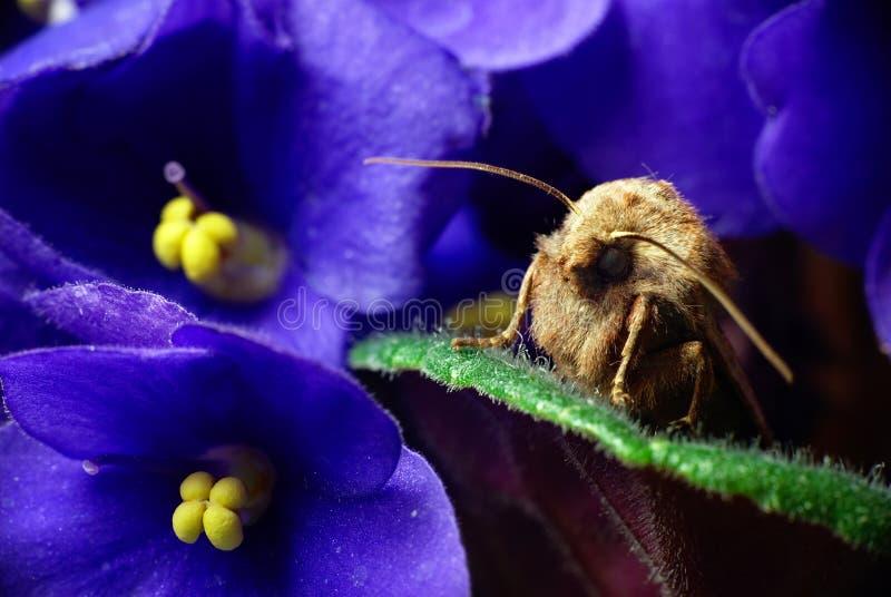 Download Noctua comes stock image. Image of botanical, flora, legs - 13321127