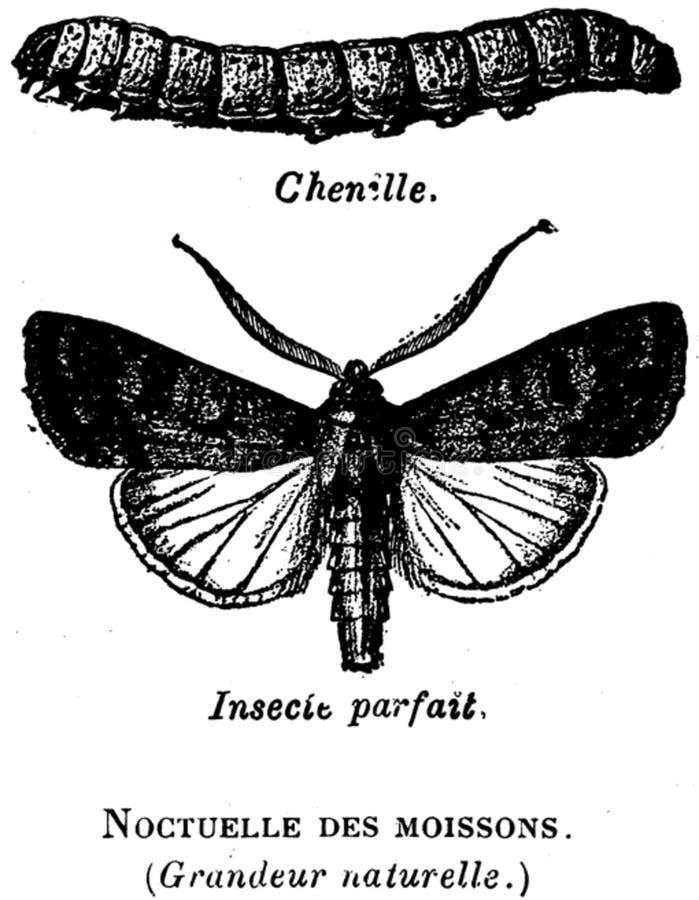 Noctuelle-oa Free Public Domain Cc0 Image
