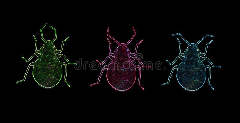 Nocturnal Bed Bug Neon Outline royalty free illustration
