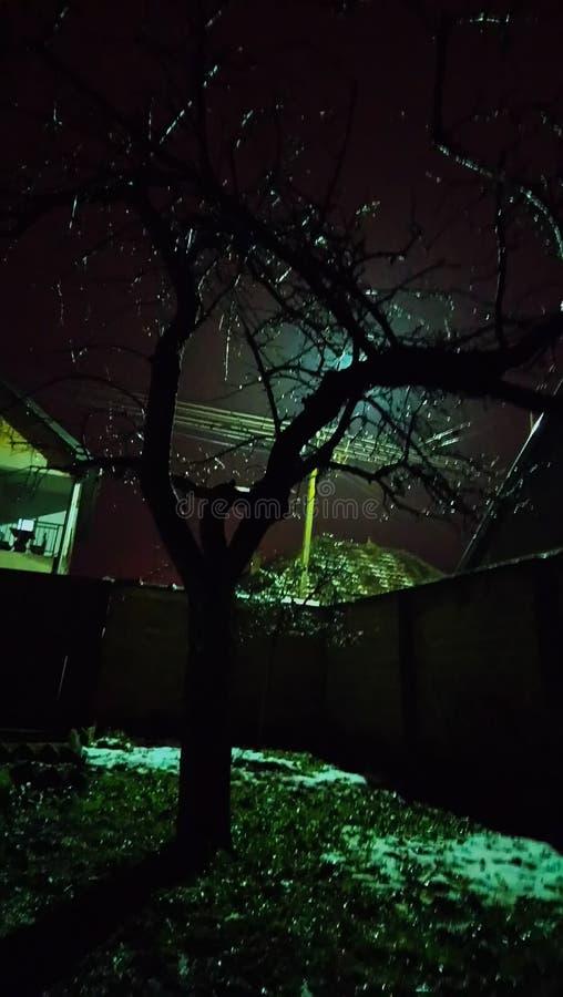 Nocy drzewo zdjęcie royalty free