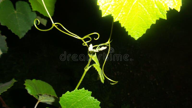 Nocy fotografia dla leafe zdjęcie stock