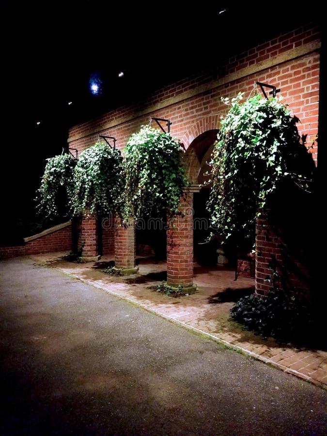 Nocy rośliny obrazy royalty free