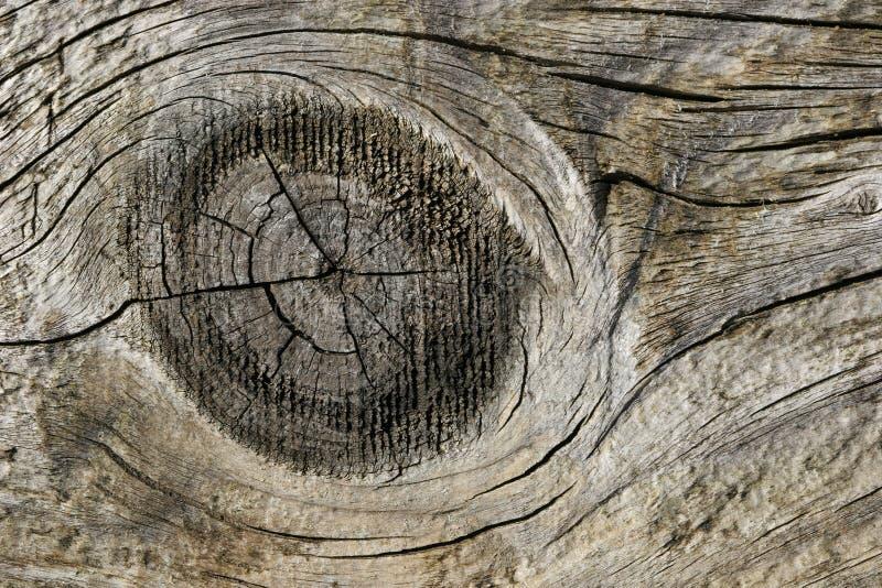 Nodo di legno immagine stock