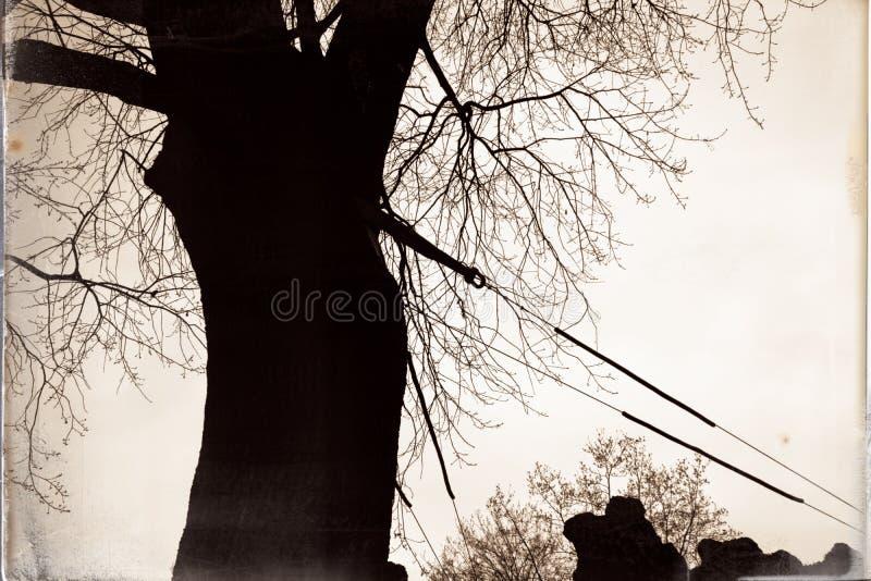 Nodo di legno, alberi nudi che crescono nel parco alla conclusione dell'autunno, strada nebbiosa nuvolosa, latifoglie nude, accam immagini stock