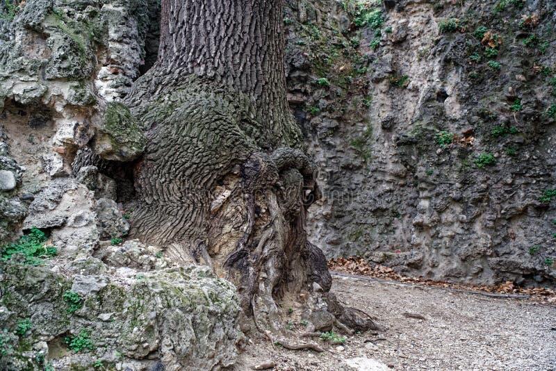 Nodo di legno, alberi nudi che crescono nel parco alla conclusione dell'autunno, strada nebbiosa nuvolosa, latifoglie nude, accam fotografia stock