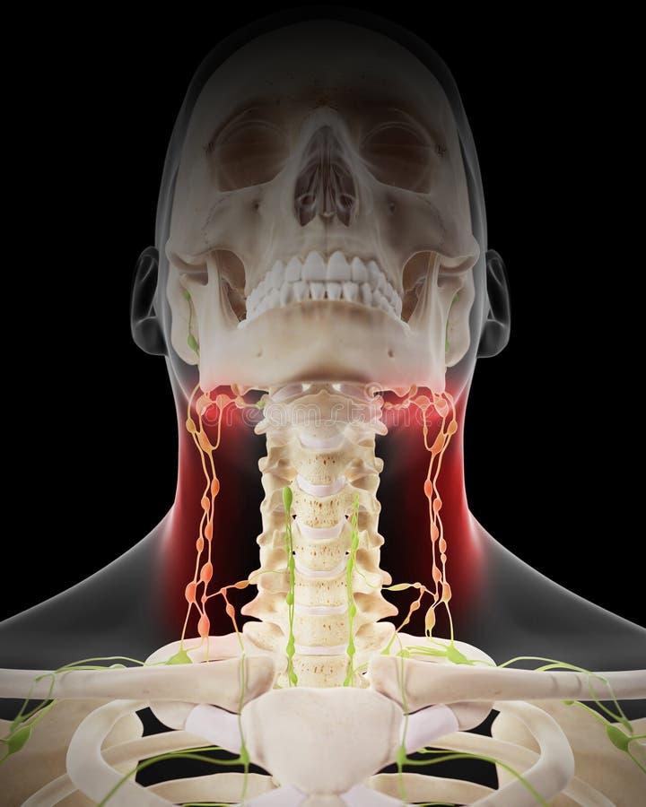 Nodos linfáticos dolorosos stock de ilustración