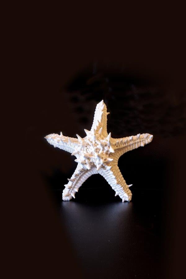 Nodosus à cornes blanc de Protoreaster d'étoile de mer images stock