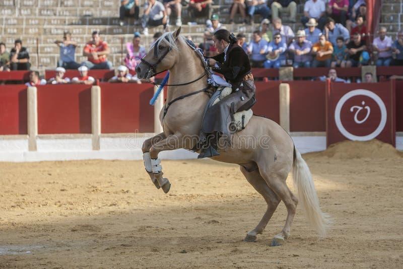 Noelia Mota, bullfighter on horseback spanish, Ubeda, Jaen, Spain. Ubeda, SPAIN - September 29, 2011: Noelia Mota, bullfighter on horseback spanish in the royalty free stock image
