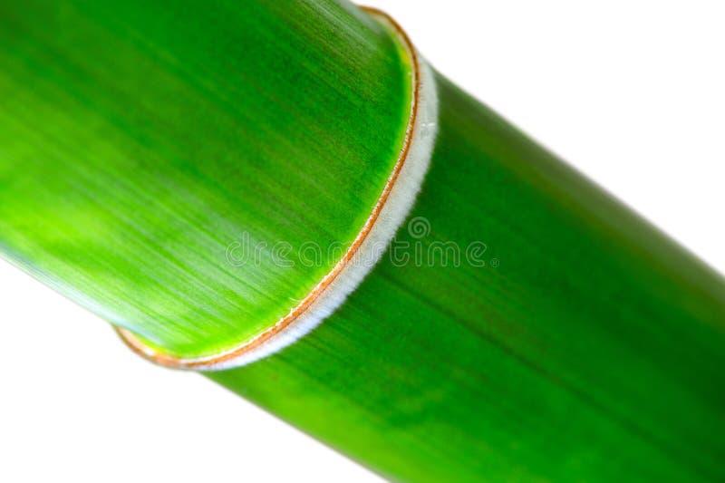 Noeud en bambou photos stock