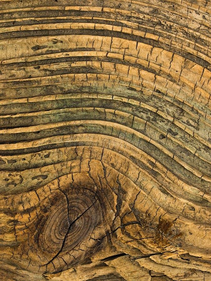 Download Noeud en bois image stock. Image du décomposé, timber - 8660037