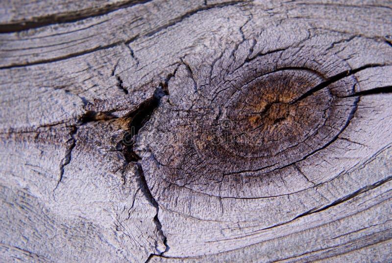 Noeud en bois de barrière image stock