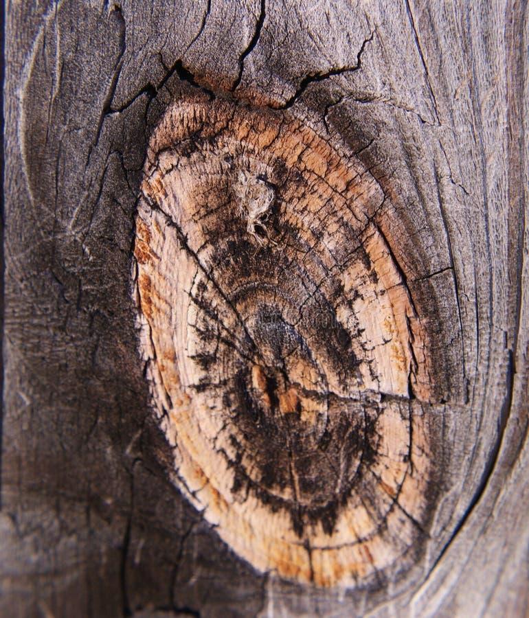 Noeud en bois de barrière photos libres de droits