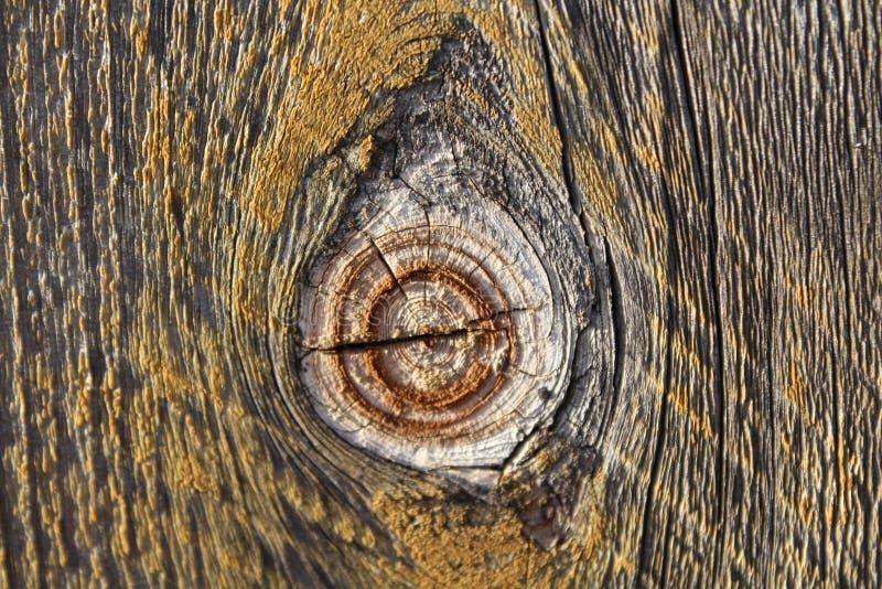 Noeud sur la barrière en bois photos stock