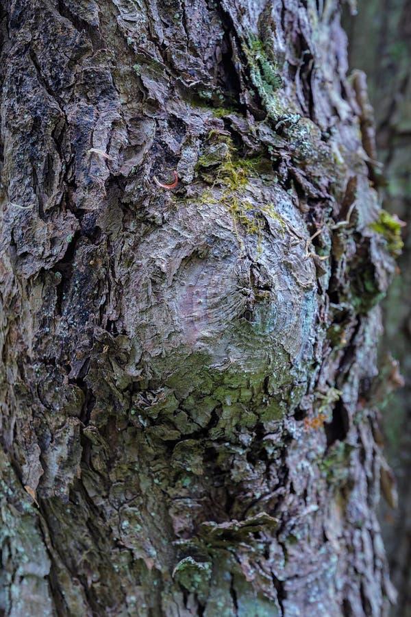 Noeud sur le tronc d'arbre photo stock
