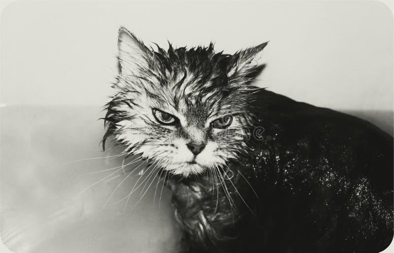 Nog gewassen! royalty-vrije stock foto