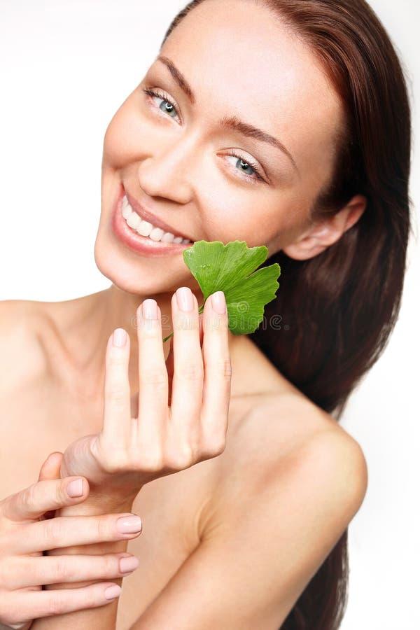 Nogueira-do-Japão, planta medicinal para uma tez bonita foto de stock royalty free