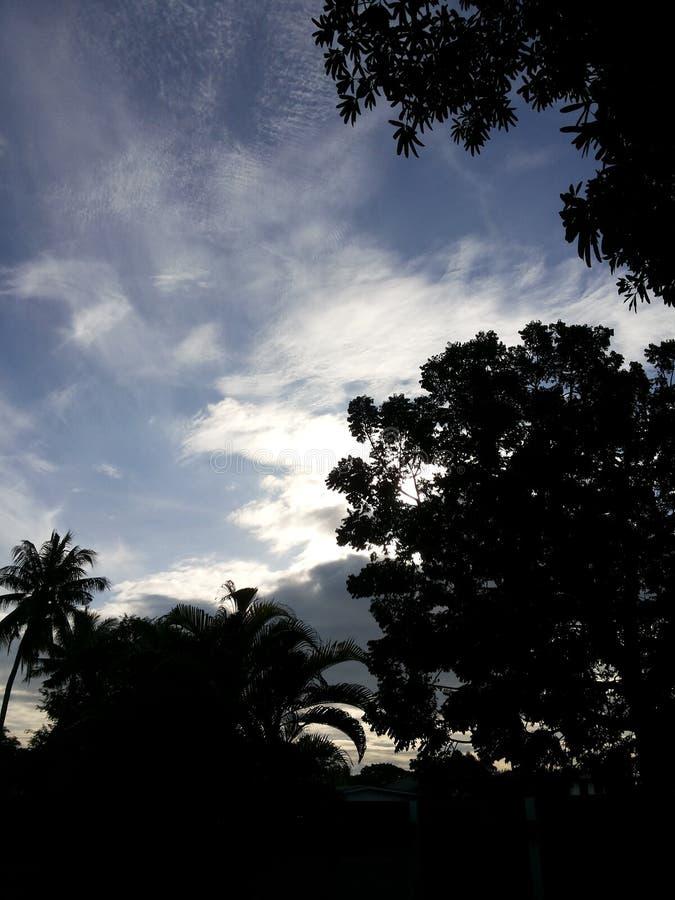 noir d'arbre de ciel image stock