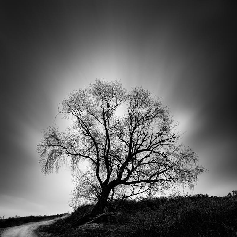 Noir et blanc, image de paysage de beaux-arts avec l'arbre photographie stock