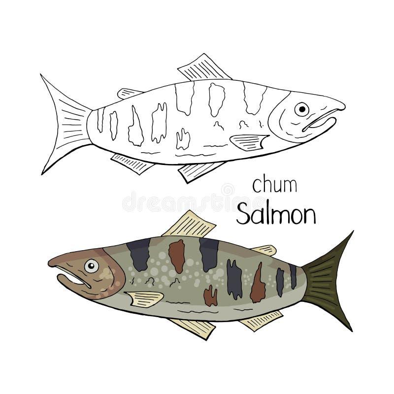 Noir et blanc saumoné et couleur de copain tiré par la main d'isolement sur le fond blanc Saumons de copain de vecteur illustration libre de droits