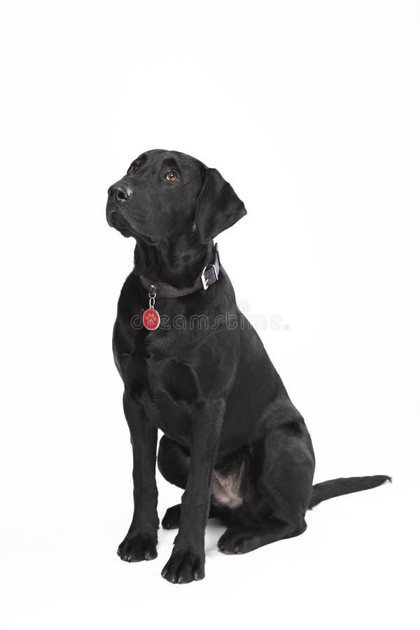 Noir mignon dog3 photo stock