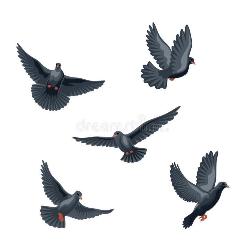 Noircissez la colombe illustration de vecteur