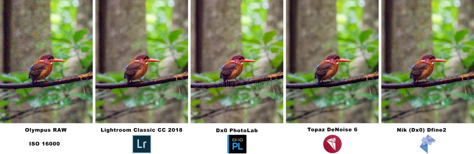 Noise reduction software comparison, Ceyx fallax. Comparison of the effectiveness of various noise reduction software products, Adobe Lightroom, Topaz DeNoise 6 stock photo