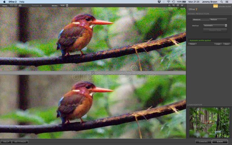 Noise reduction software, Nik DxO Dfine2. Screen shot of noise reduction software interface. Using Nik DxO Dfine2 to reduce noise in an image of a Sulawesi dwarf stock photography