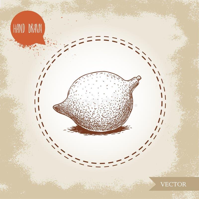 Noisetier d'Australie frais Illustration tirée par la main de vecteur de style de croquis sur le vieux fond Nourriture et dessin  illustration stock