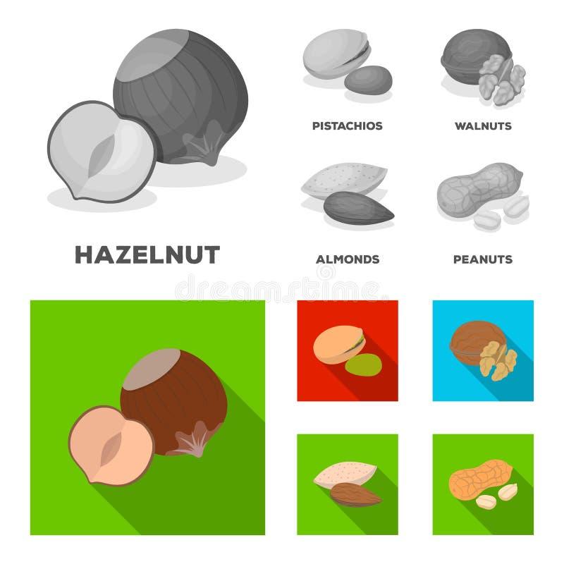 Noisette, pistaches, noix, amandes Différents genres d'icônes réglées de collection d'écrous dans le vecteur monochrome et plat d illustration stock