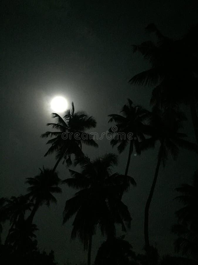 Noite brilhante foto de stock