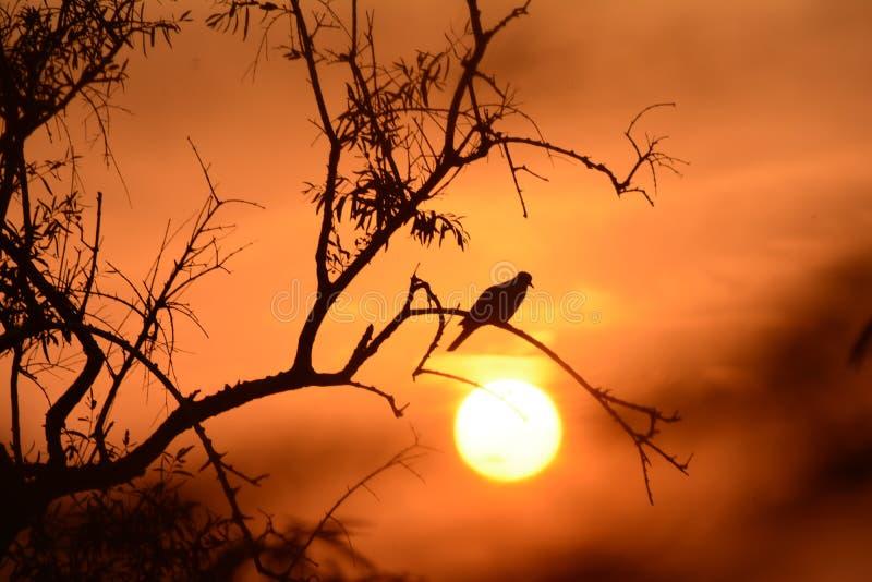 Noite cintilante do deserto foto de stock