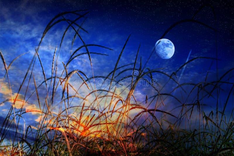 Noite da lua do verão fotos de stock royalty free