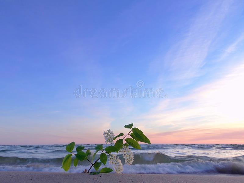 Noite do verão pelo mar Báltico imagem de stock royalty free