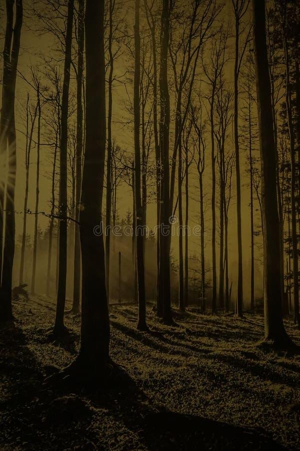 Noite em uma floresta dourada com névoa e luz morna imagem de stock