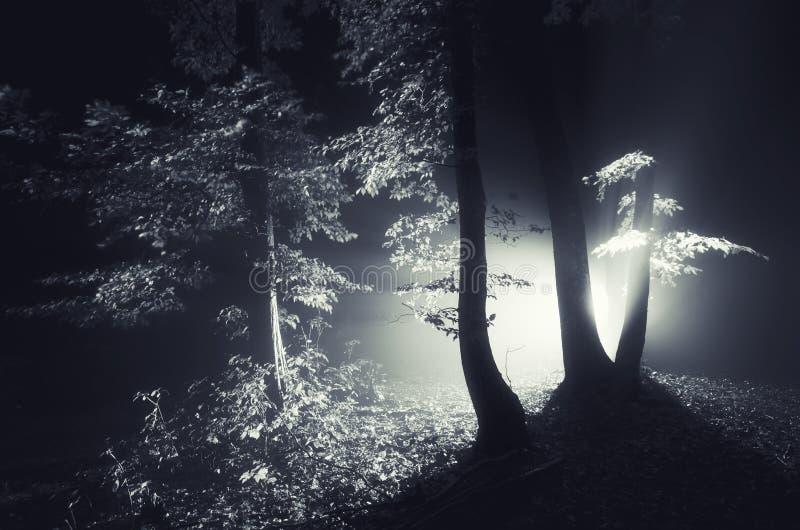 Noite em uma floresta misteriosa escura com névoa e luz imagem de stock